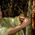 Trabajos de reconocimiento en el bosque, Francisco Villegas. LEM