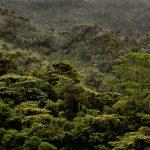 Detalles del bosque. LEM