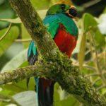 Quetzal. Luis German Olarte